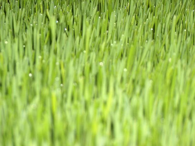 コラーゲン生成を促す「大麦若葉」のパワー